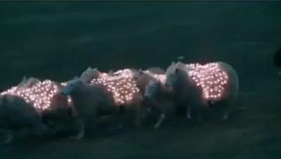 sheep led 400x227 Miorita LED   unde poate duce creativitatea cand te plictisesti