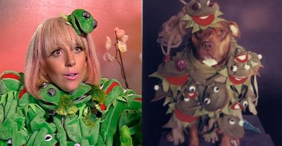 Lady Gaga Frog dog 400x208 Si cainii sunt fani Lady Gaga