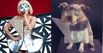lady gaga disco dog 400x208 Si cainii sunt fani Lady Gaga