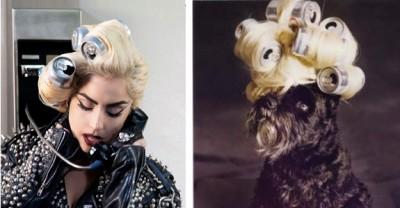 lady gaga dog can 400x208 Si cainii sunt fani Lady Gaga