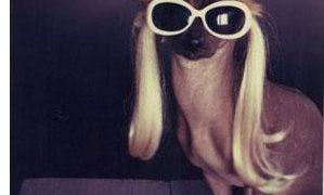 lady-gaga-dog-ribbon www.vedetepenet.ro