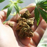 Imagini Canada a legalizat consumul de marijuana in scop recreational