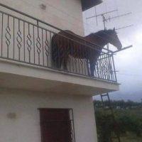 Imagini VIRAL PE NET: Un cal a fost surprins legat de balustrada unui balcon din Cluj