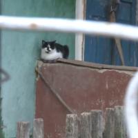 Imagini In satul Dobrusa din Republica Moldova nu mai traieste decat o pisica, dupa o dubla crima in care au murit ultimii doi locuitori.